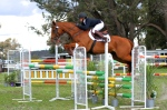 Soaring around the show jumping!